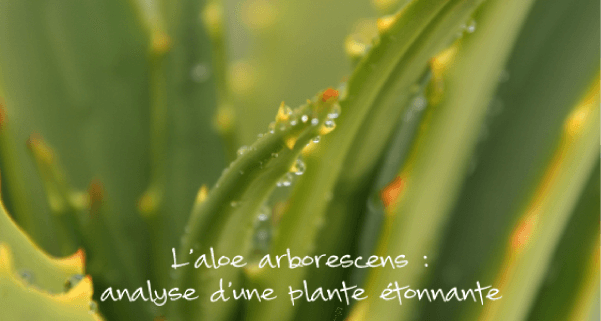 aloe-arborescens-analyse